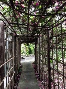 vines_flowers