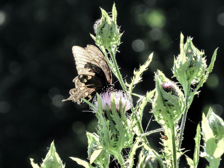butterfly_nature_photography_asheville_nc